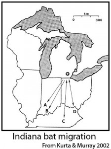 Star indicates location of study site in Michigan, where bats were banded in summer. Letters indicate hibernacula where banded individuals were found later.