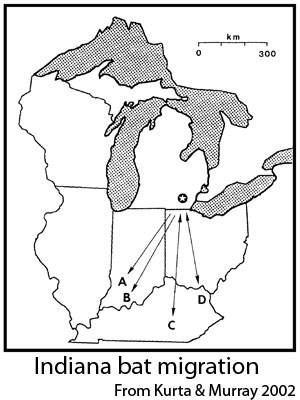 Map showing Indiana bat migratory movements in the midwest