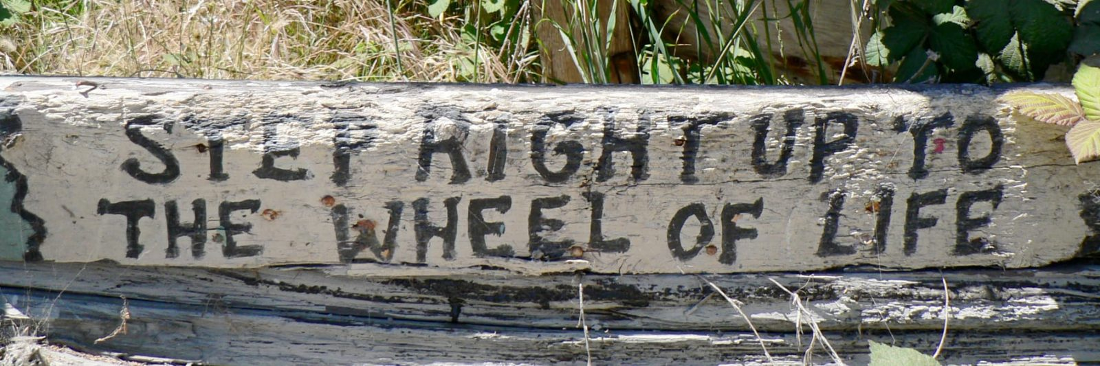 Photo: Step right up to the wheel of life