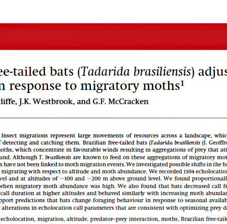 Screen shot: Free-tailed bats adjust foraging behavior in response to migratory moths