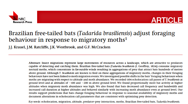 Screen shot: Free-tailed bats adjust foraging behavior in response to migratory moths