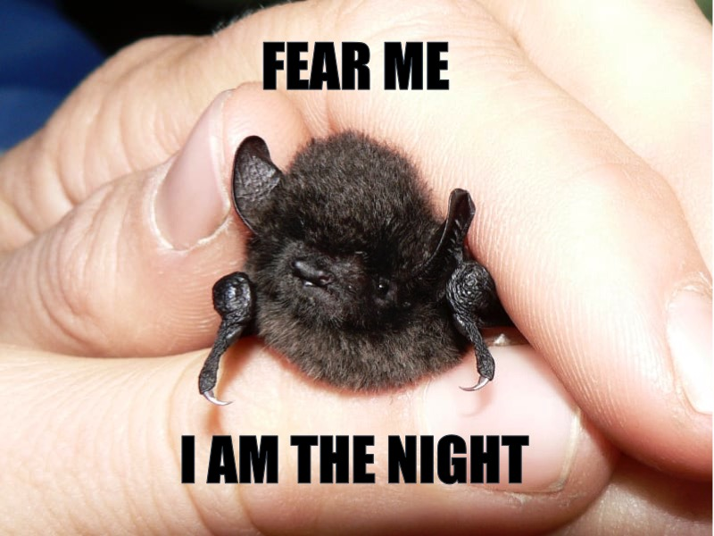 I am the night